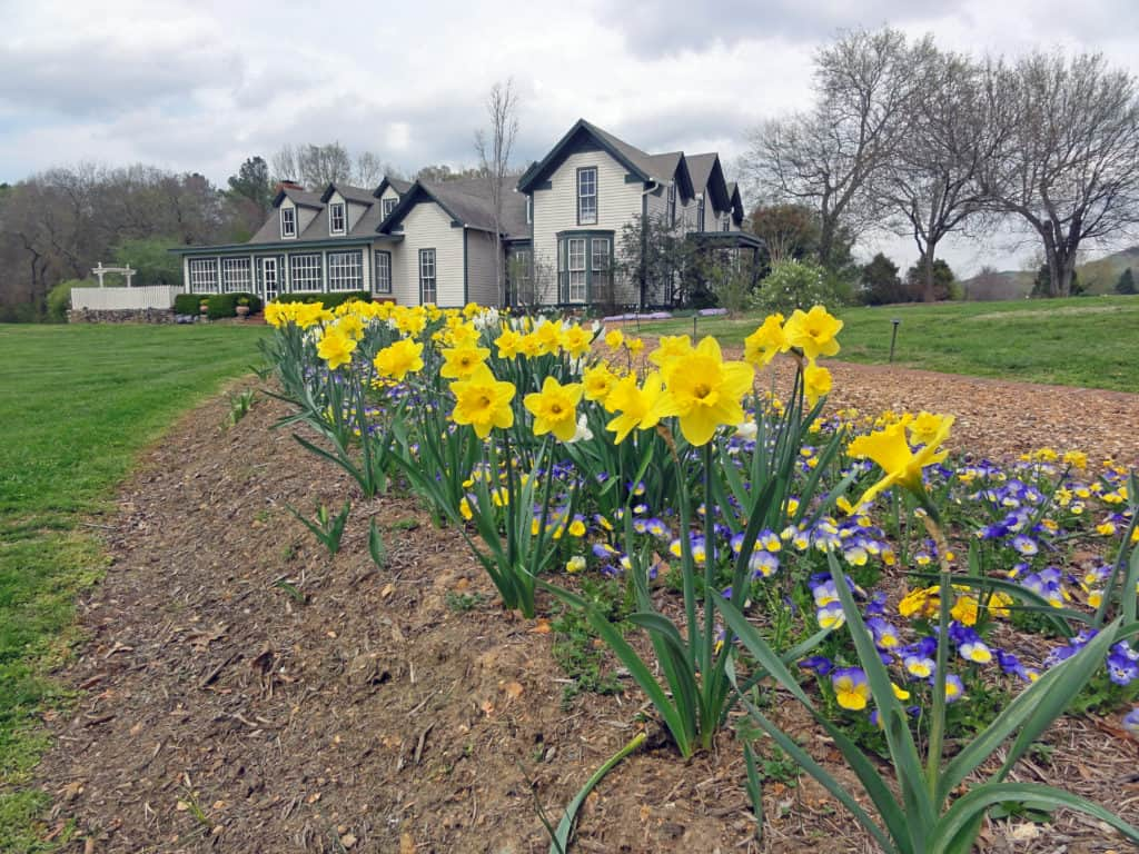 Houses in Milton with yellow flowers in front